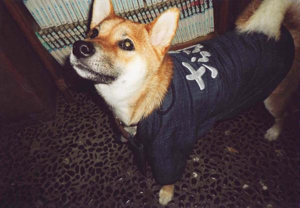 犬用オリジナル作務衣