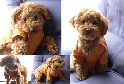 犬用作務衣